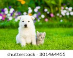 Stock photo white swiss shepherd s puppy and kitten sitting together on green grass 301464455