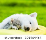 Stock photo white swiss shepherd s puppy and small kitten sleeping together 301464464