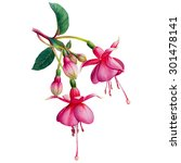 Fuchsia Watercolor Hand Drawn...
