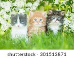 Stock photo three little kittens sitting near white flowers 301513871