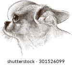 portrait of lapdog   Shutterstock .eps vector #301526099