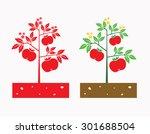 Tomato Plant With Tomato Fruit...