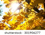 background of autumn leaves | Shutterstock . vector #301906277
