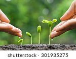 agriculture. growing plants.... | Shutterstock . vector #301935275