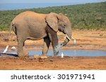 An African Elephant  Loxodonta...
