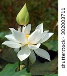 Vietnamese Flower  Pure White...