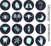 organ icon set. vector... | Shutterstock .eps vector #302042261