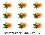 mint  apricot cut in half on... | Shutterstock . vector #302059187