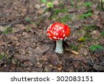 mushrooms in the forest | Shutterstock . vector #302083151