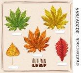 set of autumn leaves  orange ...   Shutterstock .eps vector #302097899