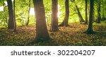 trunks of trees in the morning...   Shutterstock . vector #302204207