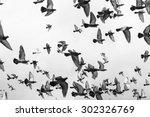 Photo Of Black And White Masse...
