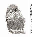 lion pencil sketch | Shutterstock . vector #302329559