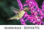 Anna\'s Hummingbird  Color Imag...