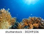 ocean  sun and fish | Shutterstock . vector #30249106