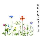wild flowers on a white... | Shutterstock . vector #302513591