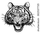 head of angry tiger hand drawn... | Shutterstock .eps vector #302537735
