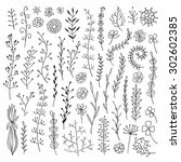 vector hand drawn botanical... | Shutterstock .eps vector #302602385