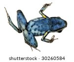 Small photo of Spotted-legged poison frog (Ameerega hahneli) on its back symbolizing the global decline in amphibian species