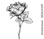 single rose hand drawn artistic ... | Shutterstock .eps vector #302614109