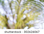 Blurred Beautiful Palm Tree