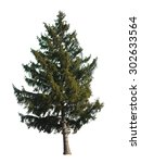evergreen tree isolated on... | Shutterstock . vector #302633564