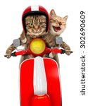 Funny Cats   Driving A Moped....