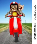 two funny cats are driving a... | Shutterstock . vector #302690627