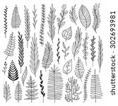 vector hand drawn botanical... | Shutterstock .eps vector #302693981