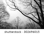 silhouette of tree branches. | Shutterstock . vector #302696015