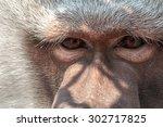 Lonely Monkey Sad Eyes Quite...