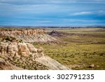 Petrified Forest Landscapes