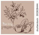 blueberries. hand drawn vector...   Shutterstock .eps vector #302828444