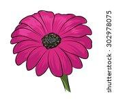 gerbera colored vector icon      | Shutterstock .eps vector #302978075