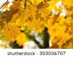 Autumn In The Park  Golden...
