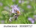 bumble bee on a flower | Shutterstock . vector #303089717