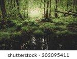 Green Swamp Vegetation