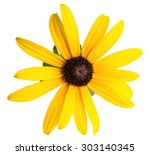 Daisy Yellow Flower Isolated O...