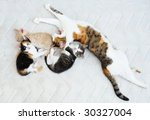 cat family with three kittens... | Shutterstock . vector #30327004