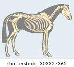 Scientific Illustration  Horse...