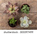 House Plant. Succulent