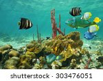 Corals And Colorful Tropical...