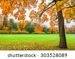 beautiful maple with yellow... | Shutterstock . vector #303528089