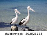 Two Pelicans Looking In The...