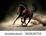 Black Horse Run Gallop In Dust...