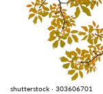 Orange Tree Leaf On White...