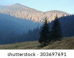 Small photo of Two spruce trees on a Chocho?owska Meadow in Tarty Mountains, Poland