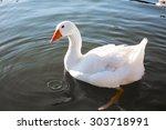 Close Up Of The White  Goose I...