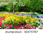 Colorful Springflowers And...