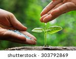 hand of a farmer watering and... | Shutterstock . vector #303792869